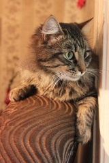 Our lovely pets –cats