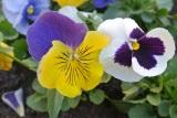 Ilya's Babkin spring mood in photoetudes